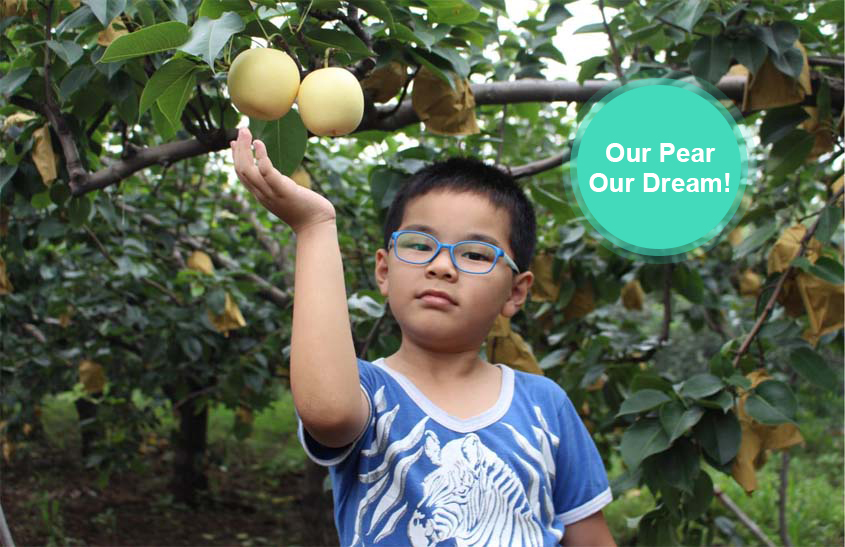 Our Pear, Our Dream