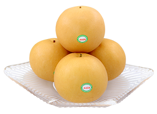 Yuanhuang Pear